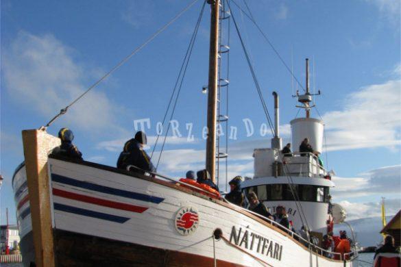 Baleniera utilizzata per il whale watching in Islanda