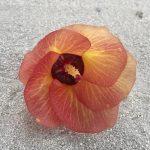 Fiore solitario su una spiaggia delle Maldive
