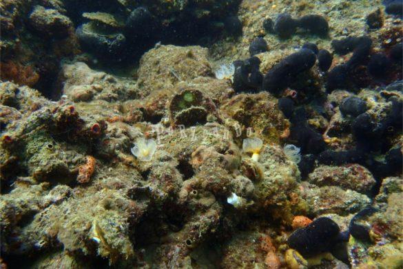 Spirografi sul fondale del mare di Sistiana