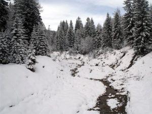La foresta di Tarvisio