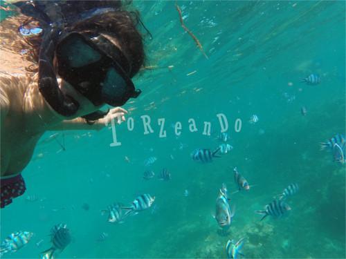 snorkelling a Yasawas