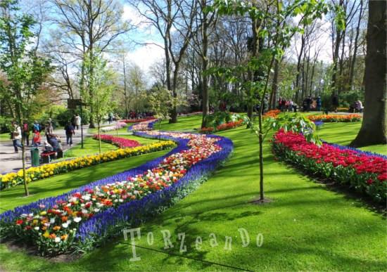 Fiori sgargianti del parco di Keukenhof in Olanda