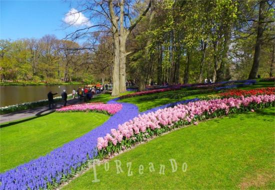 Fiori del parco botanico di Keukenhof in Olanda