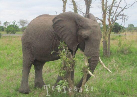 elefante del Parco Kruger in Sud Africa