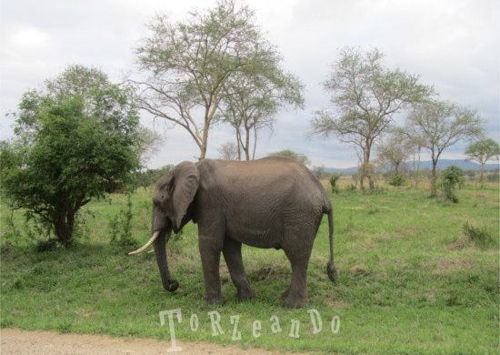 elefante al Parco Kruger in Sud Africa