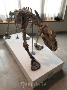 scheletro di orso preistorico